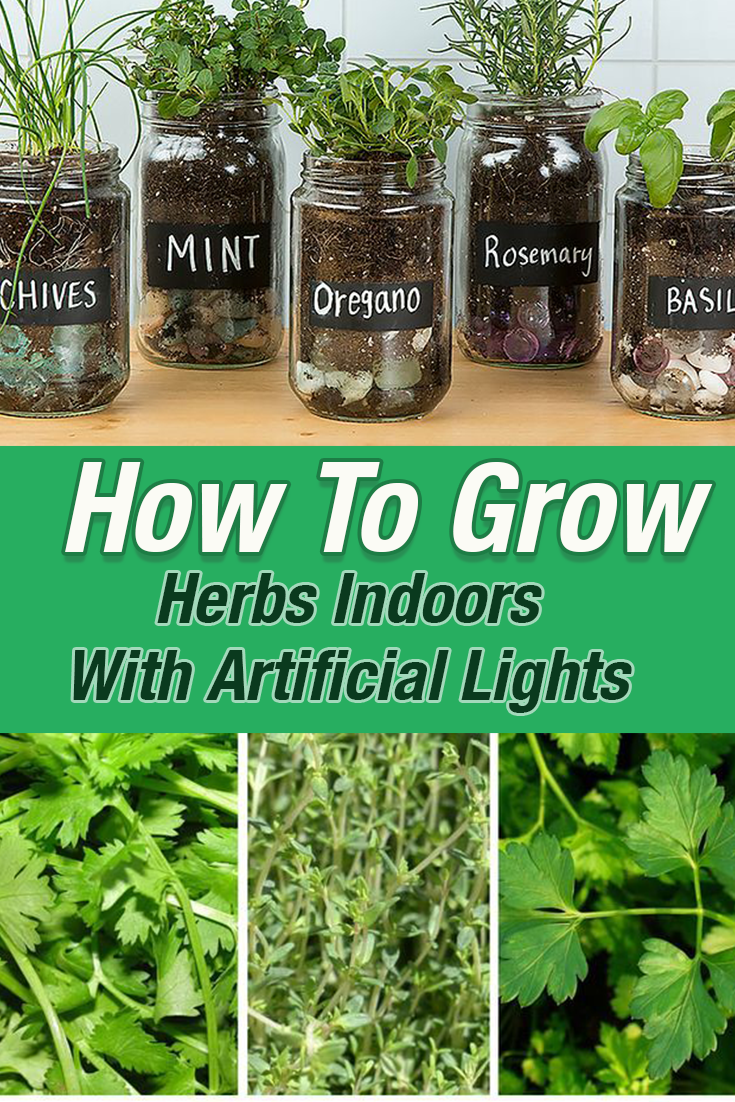 Would You Like To Know How To Grow Herbs Indoors With Artificial