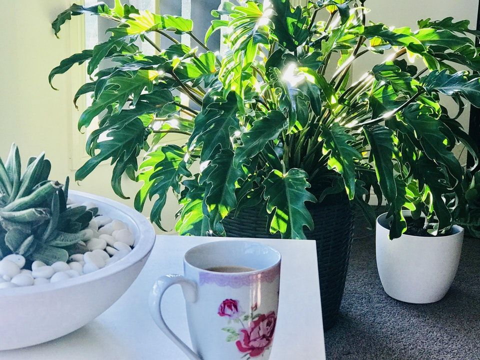 Morning coffee with my plant friends