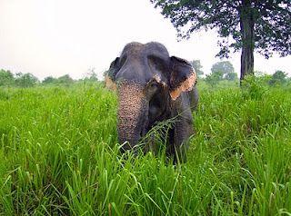 Elephant - HDR Nature