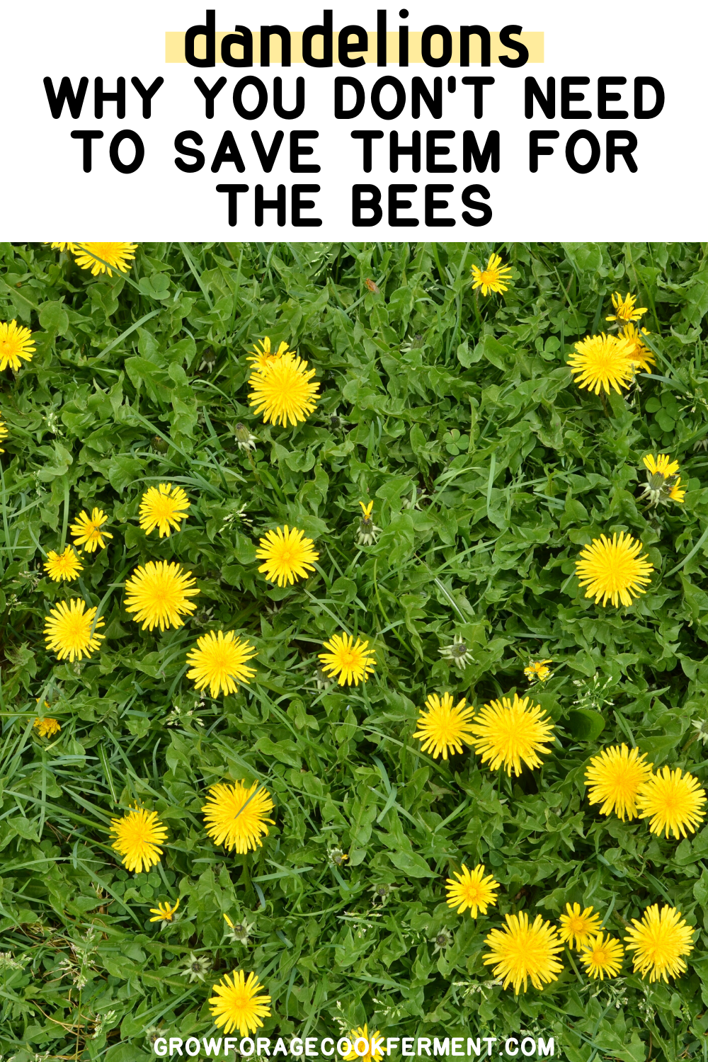 6 Reasons You Don T Need To Save Dandelions For The Bees In 2020 Dandelion Wild Edibles Wild Food
