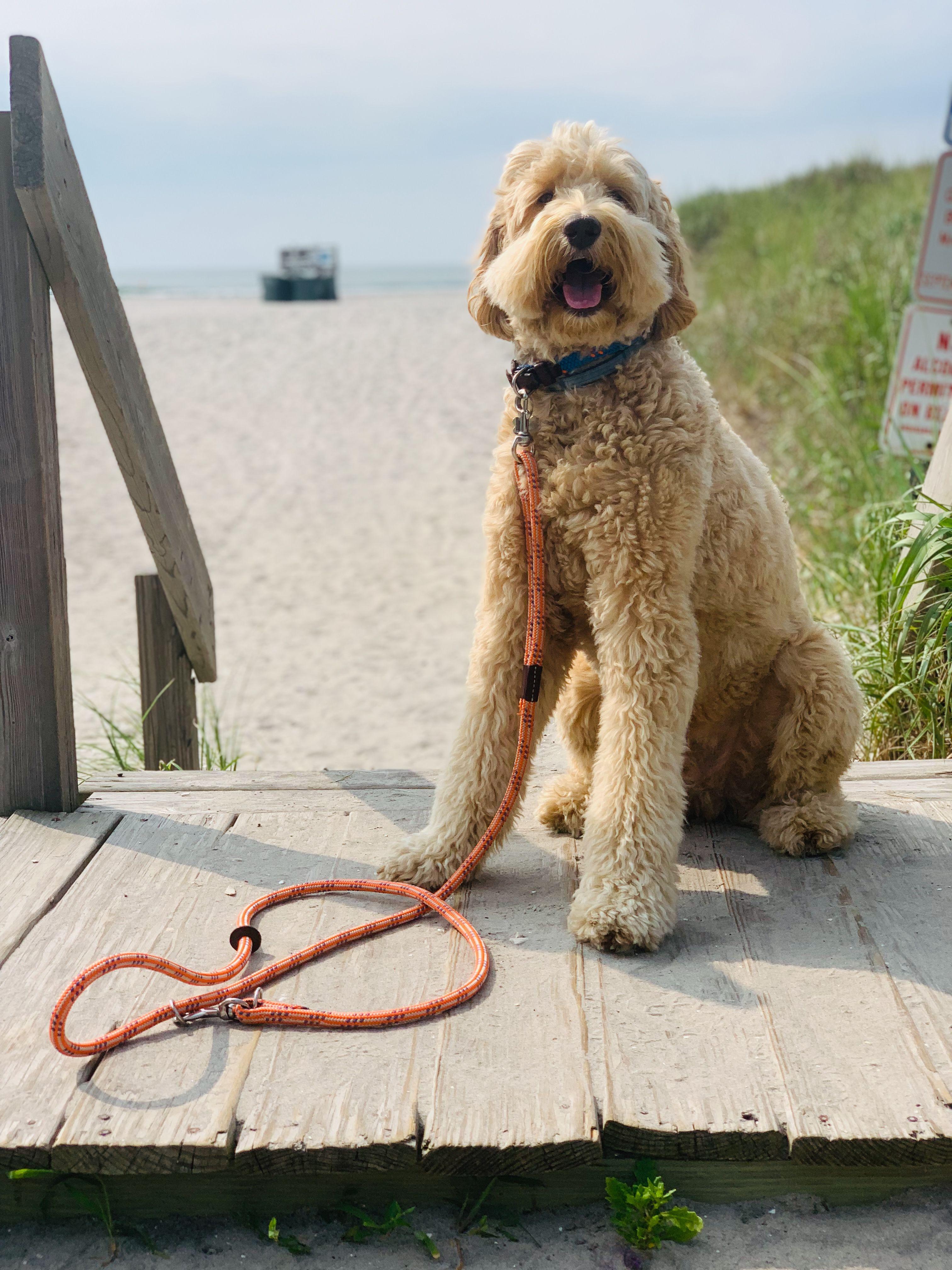 Rope Leash Dog Leash Dog Beach Cute Dogs