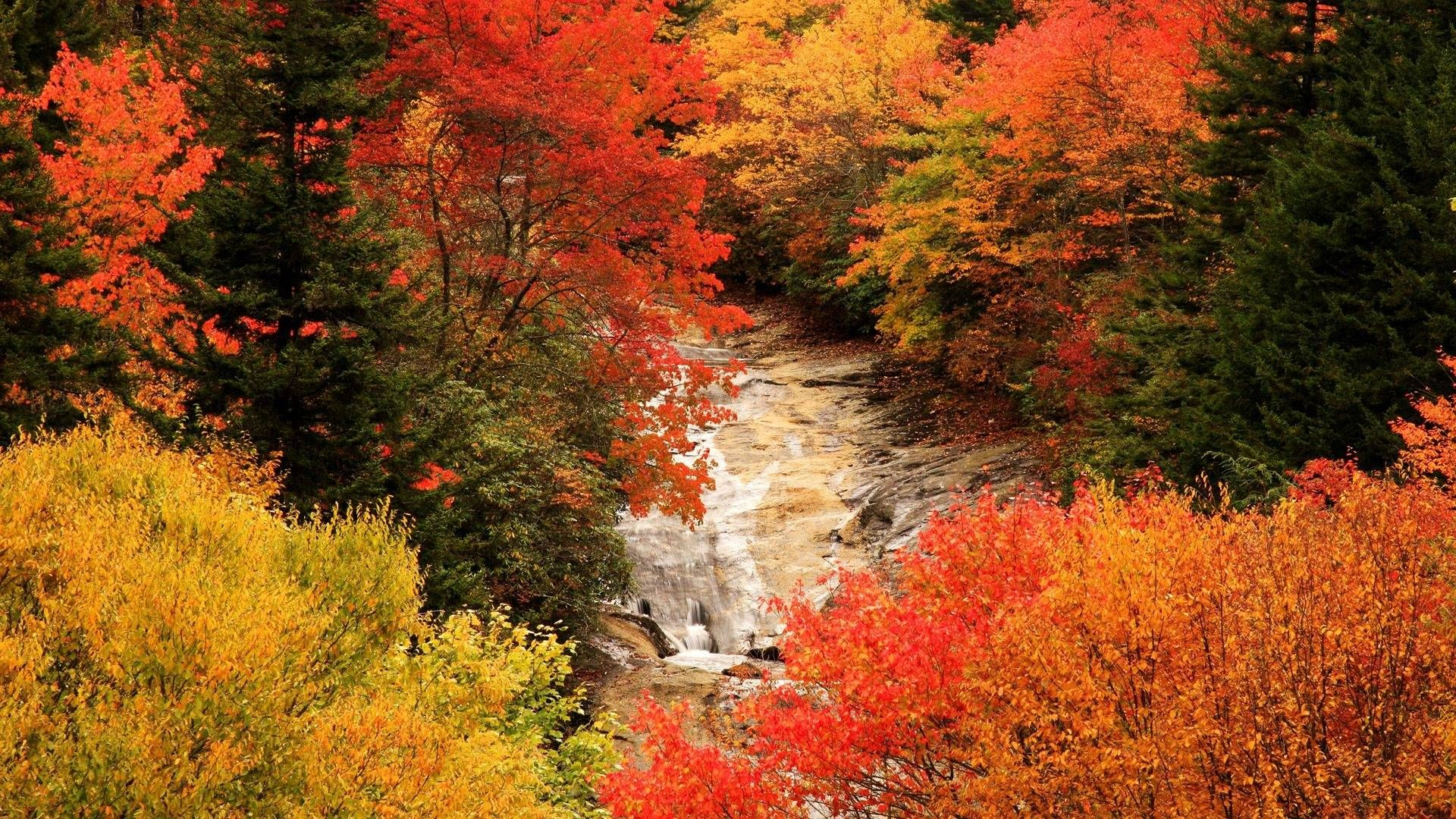 Fall In Forest Wallpapers Wallpapers) U2013 Wallpapers