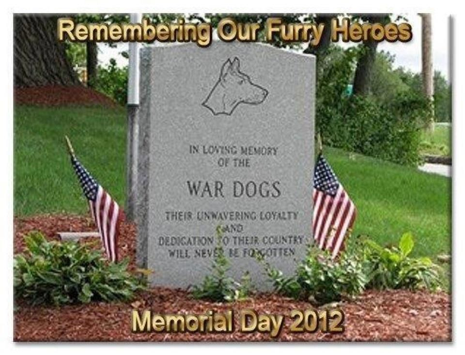 Pin By Ann Radford On Gone To The Dogs War Dogs Dog Hero Military Working Dogs