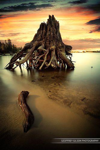 The Tree Cemetery . Cascade Lake . Idaho