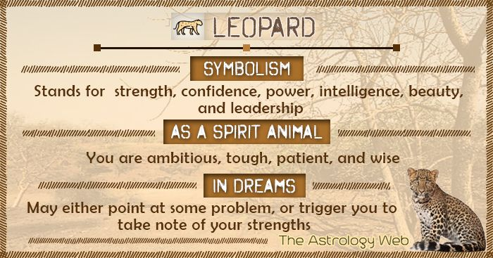Leopard Symbolism Spirit Animal Dream   Spirit animal. Spirit animal totem. Spiritual animal