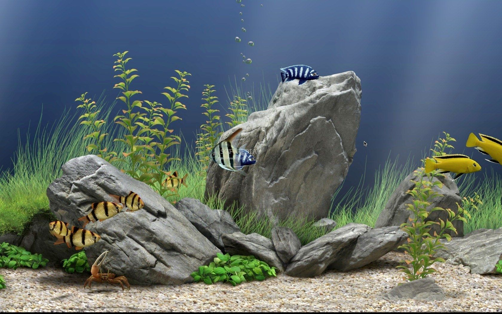 Freshwater fish tank upkeep - Freshwater Aquarium Stones Layout A Miniature Northern California Landscape