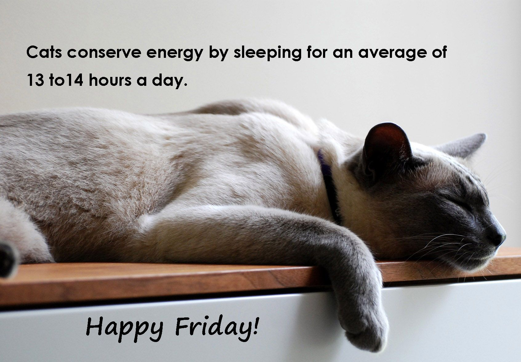 Cats conserve energy by sleeping for an average of 13 to