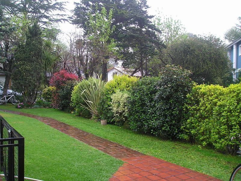Seto variado buscar con google seto garden outdoor - Arbustos perennes para jardin ...