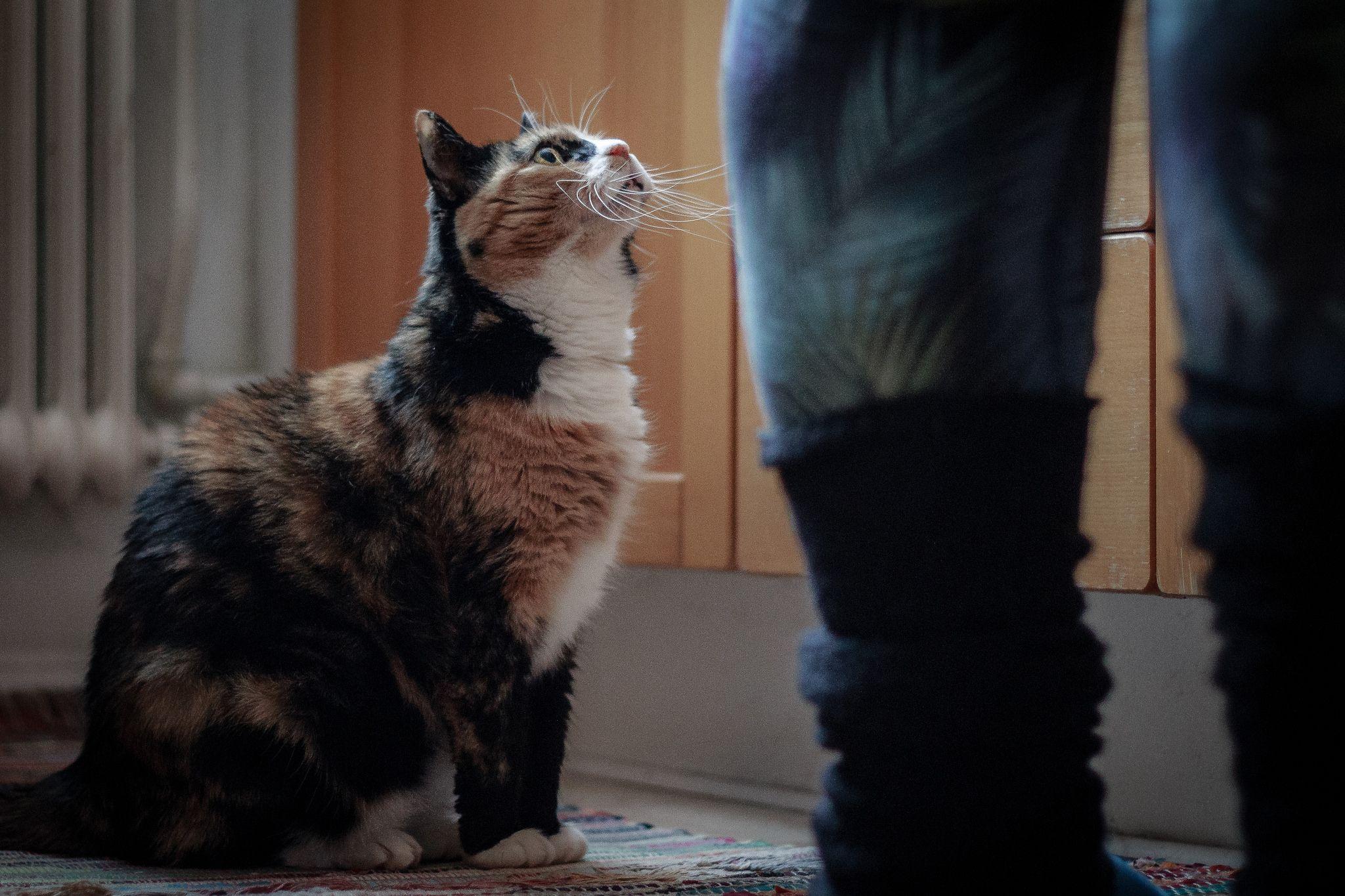 https://flic.kr/p/Q6AL8T | Mata mig | Mitt bidrag till fotosöndag 161211 på temat väntan. Doris väntar på maten som aldrig kan komma snabbt nog.