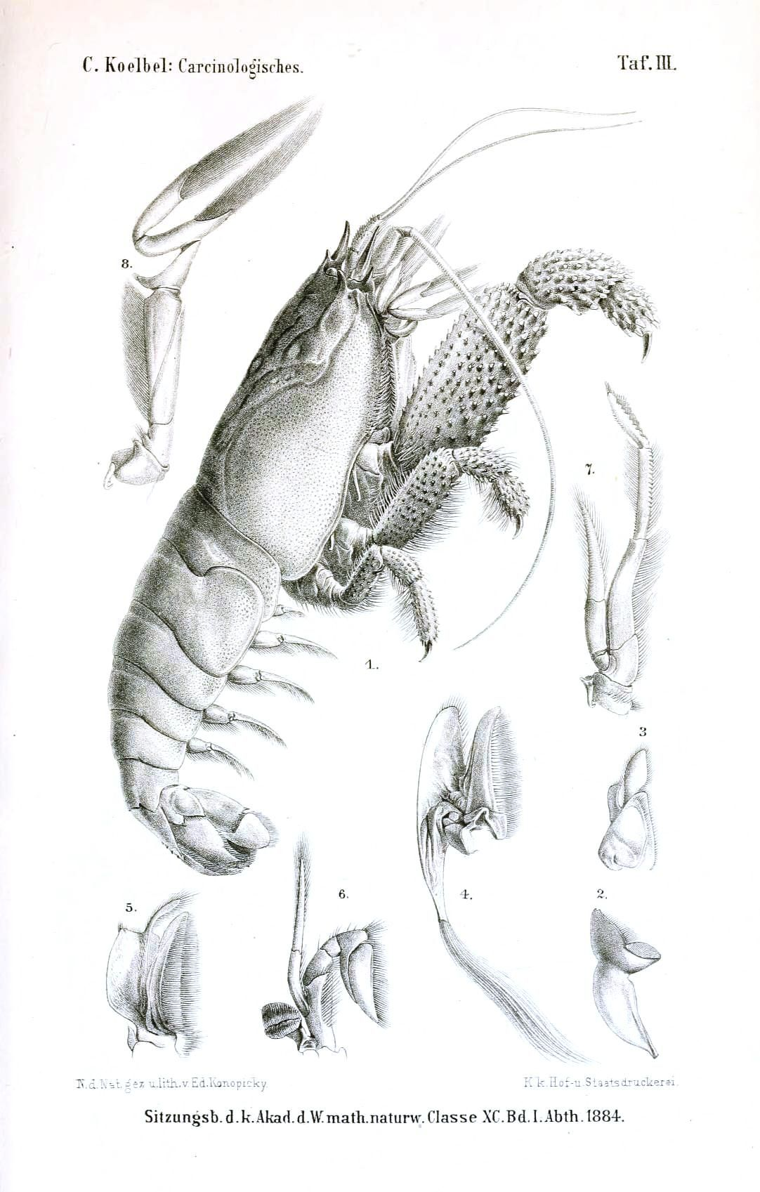 Animal - Crustacean - Giant shrimp   해양생무ㄹ   Pinterest   El ...
