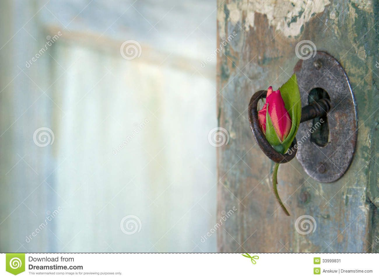 old door opening to flowers | Green old wooden door opening with light shining through and red rose ...