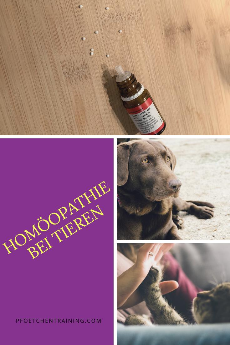 Homoopathie Fur Tiere Gesunde Hunde Tiere Alter Hund