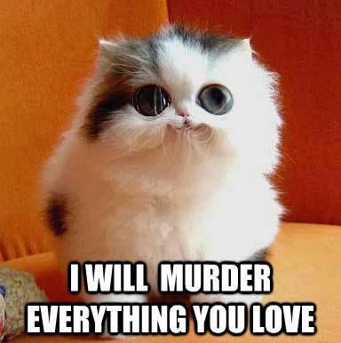 Animal Memes Psycho Kitty Cute Animals Scary Animals Kittens Cutest