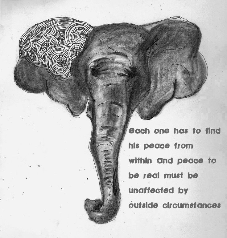 Elephant Quotes Extraordinary Elephant Quotes Google Search Elephants Pinterest Elephant