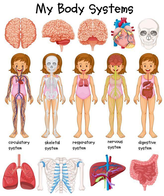 Extrêmement giochi-anatomia-fisiologia-corpo-umano-bambini-montessori  VQ31