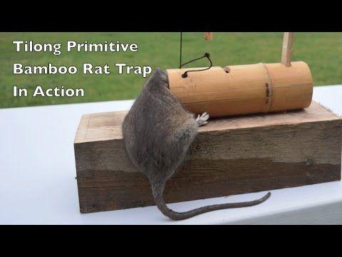 Tilong Bamboo Rat Trap In Action Primitive Survival Rat X2f Mouse Trap Mouse Trap Mondays Youtube Rat Traps Mouse Traps Rat Trap Diy