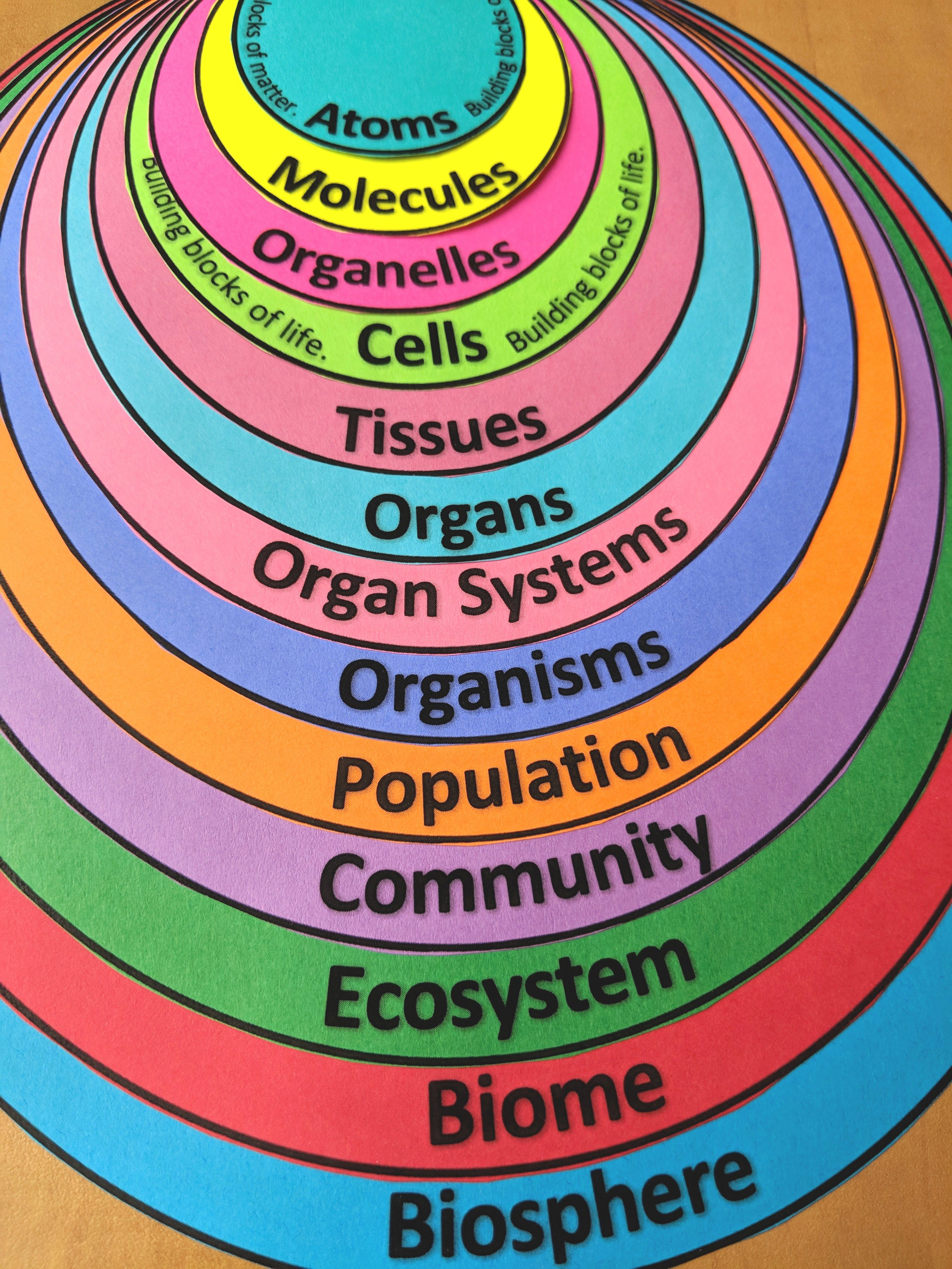 Free Visual Tool To Illustrate Levels Of Organization Also Serves As A Handy Little Note Organizer Levelsof Teaching Biology Science Notes Biology Classroom