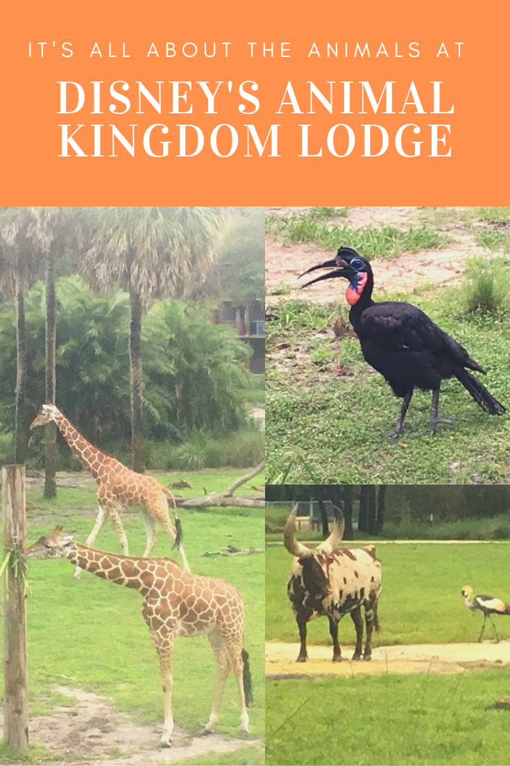 Disney isn't always about Mickey Mouse. At Animal Kingdom Lodge it is truly all about the ...