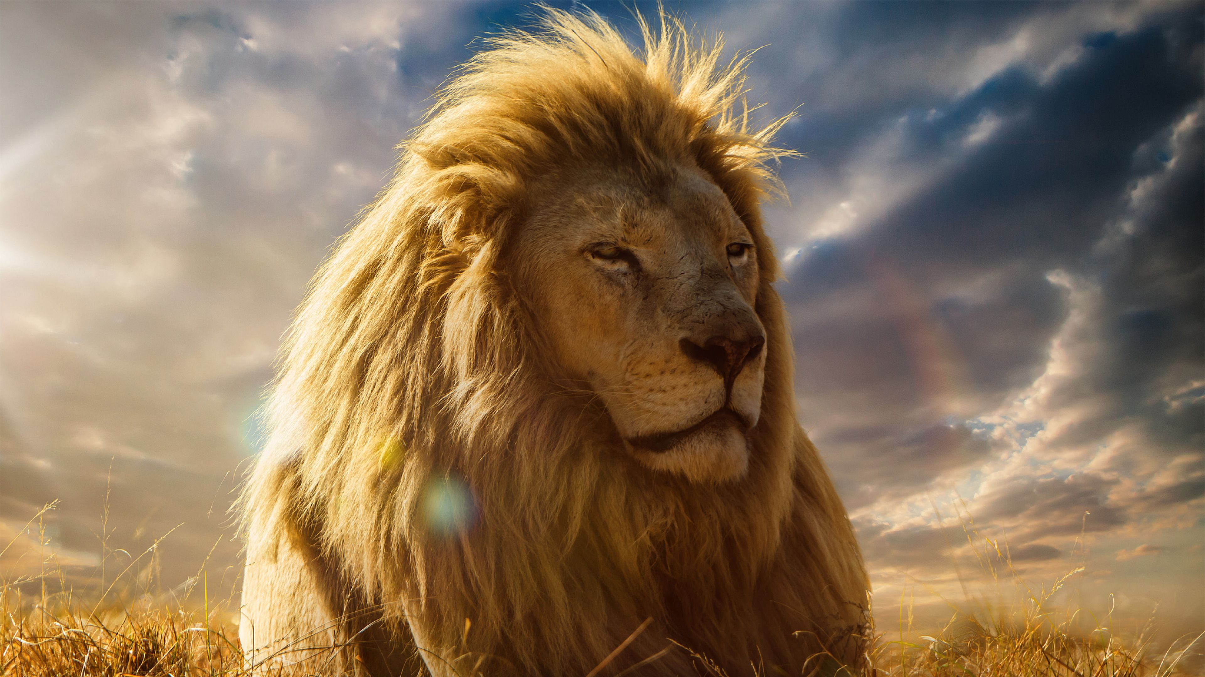 Lion king 4k we hope you like lion king 4k wallpaper and if you