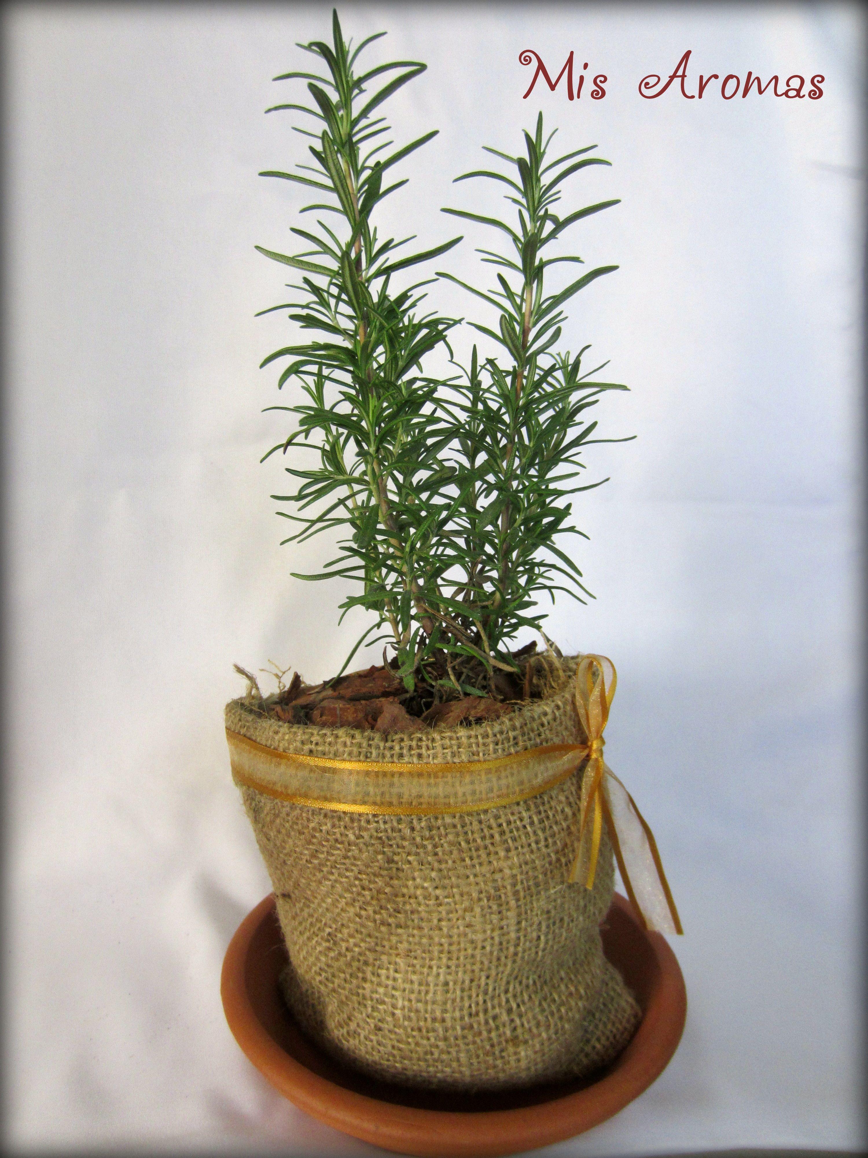 Centros de mesa para casamientos con plantas arom ticas en - Como decorar macetas de barro ...