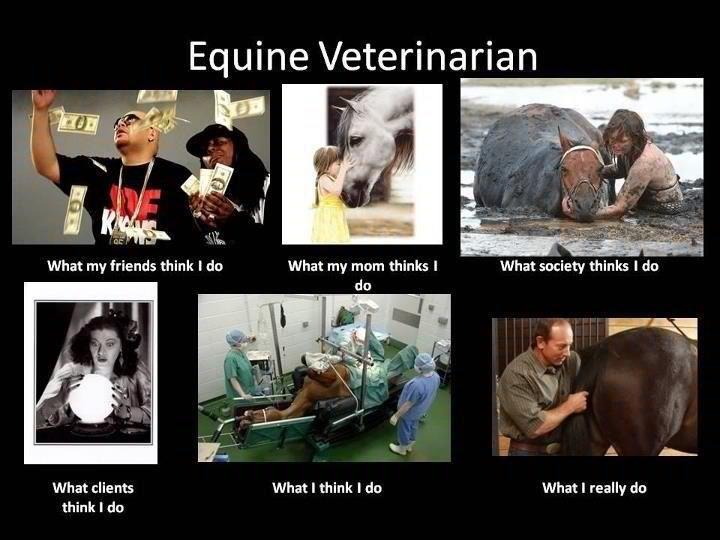 Equine Veterinarian Veterinarians humor