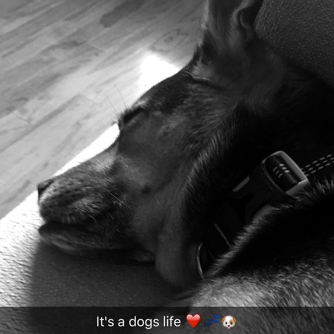#ilovemydog #instagramdogs #dogstagram #happydog #dogsmile #doglife #dogsoftheday #adoptdontbuy