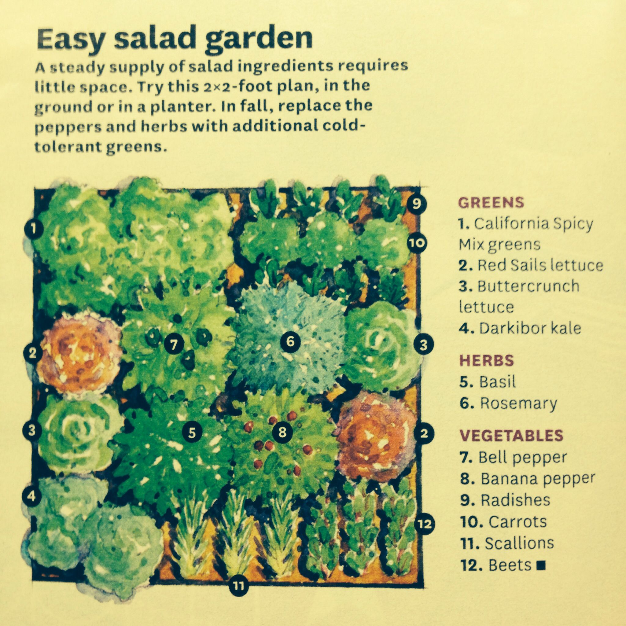 Easy salad garden from a 2 x plan. Build the planter into a freestanding  island to make it waist height! Better Home and Gardens June 2014 Idea.