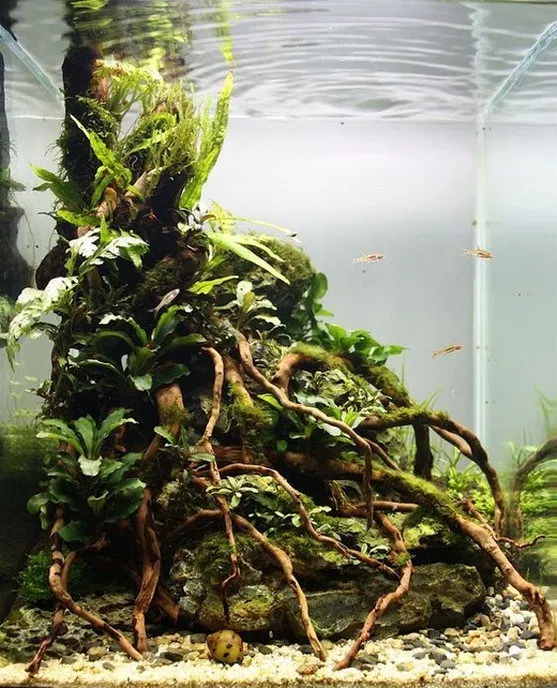 17 easy diy aquascape design on low budget 10 in 2020 ...