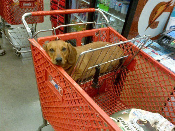 ¡Yo también quiero ir a Home Depot, Papawh!