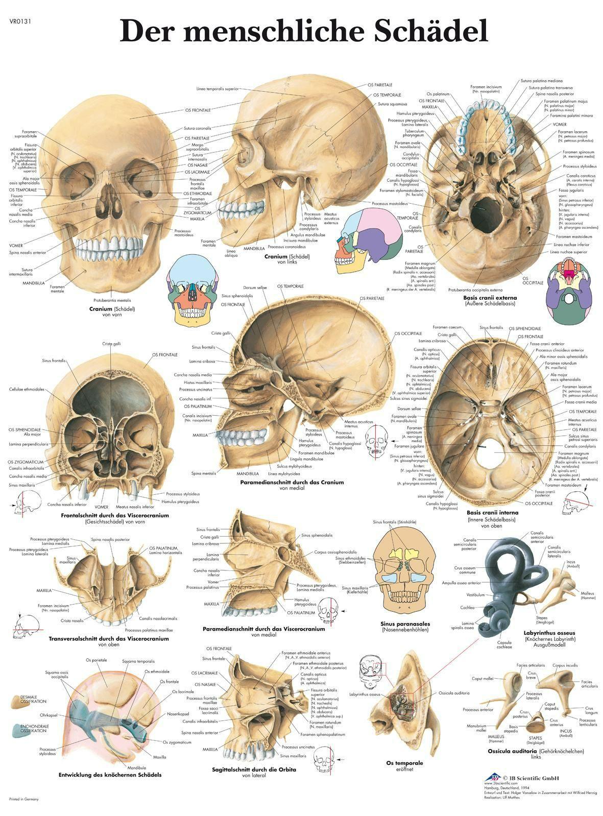 Pin de Jaime Castellanos en Craneo   Pinterest   Anatomía