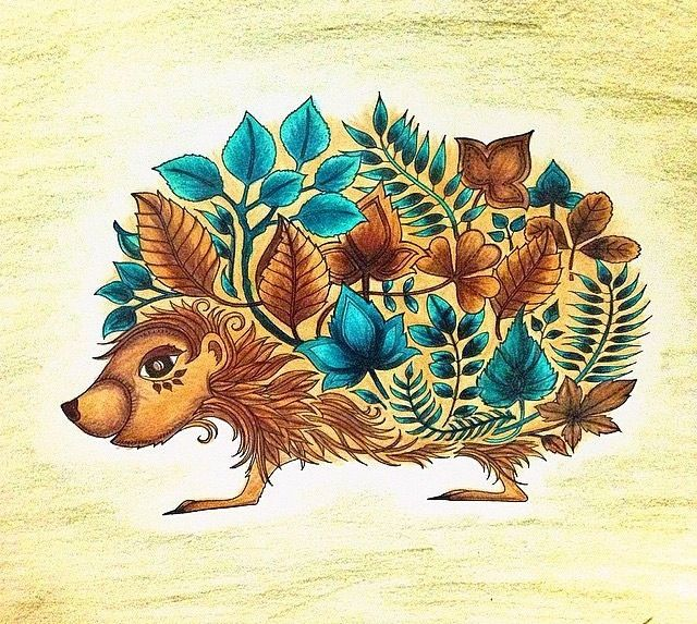Hedgehog Enchanted Forest Enchanted Forest Coloring Johanna Basford Enchanted Forest Enchanted Forest Coloring Book
