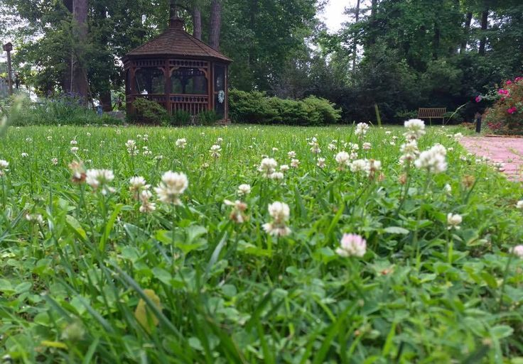 Create A Happy Go Lucky Fuss Free Clover Lawn With Images Clover Lawn House In Nature Lawn