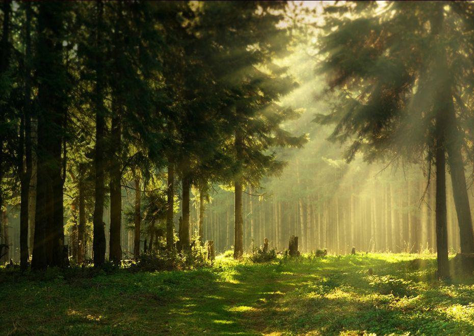 Resultado de imagem para epping forest