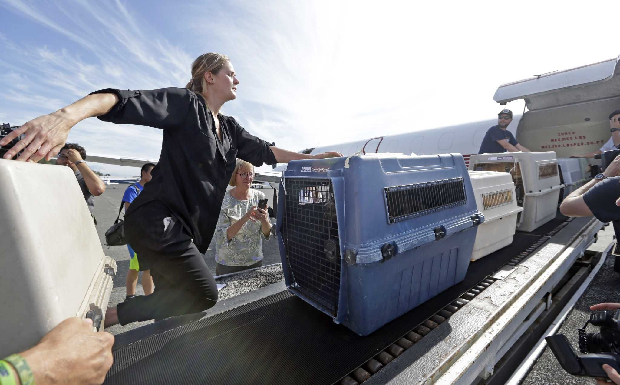 Animals from Texas arrive for adoption in Seattle