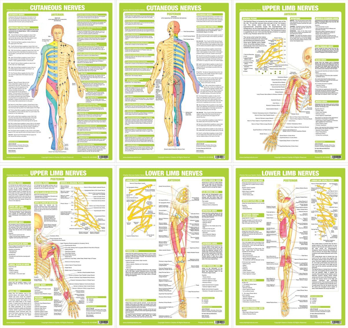 Nervous System Anatomy Charts - Set of 6   Nervous system ...