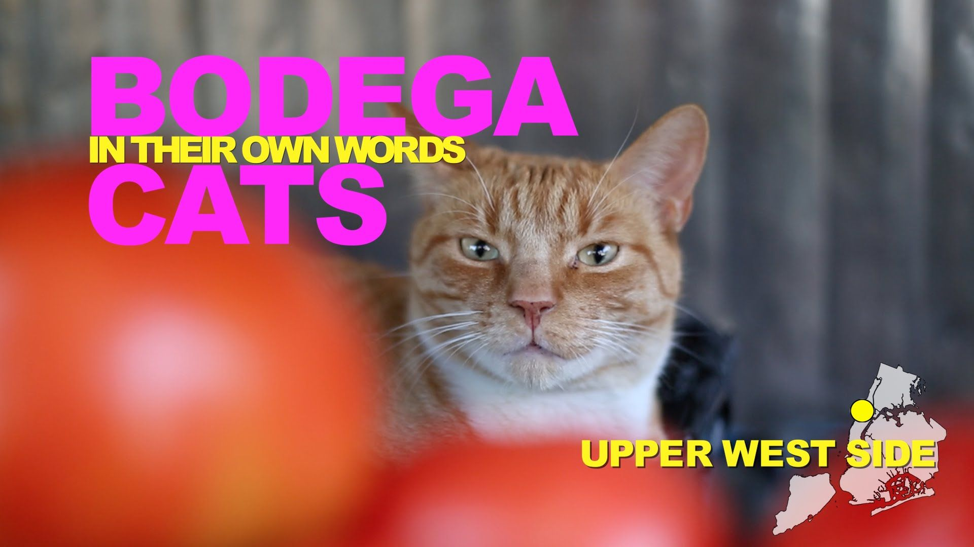 Bodega Cats In Their Own Words A Series Telling Stories of New