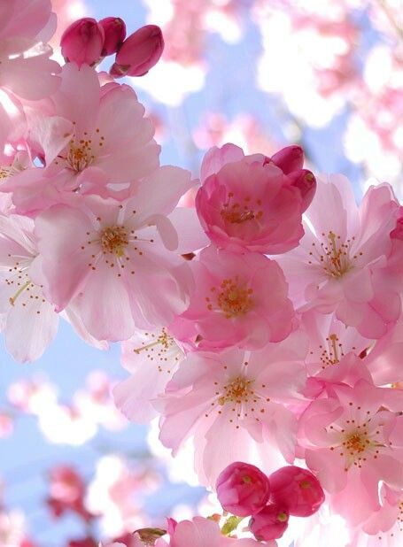 Pretty pink flowers doa manzaralari pinterest iekler duvar pretty pink flowers mightylinksfo