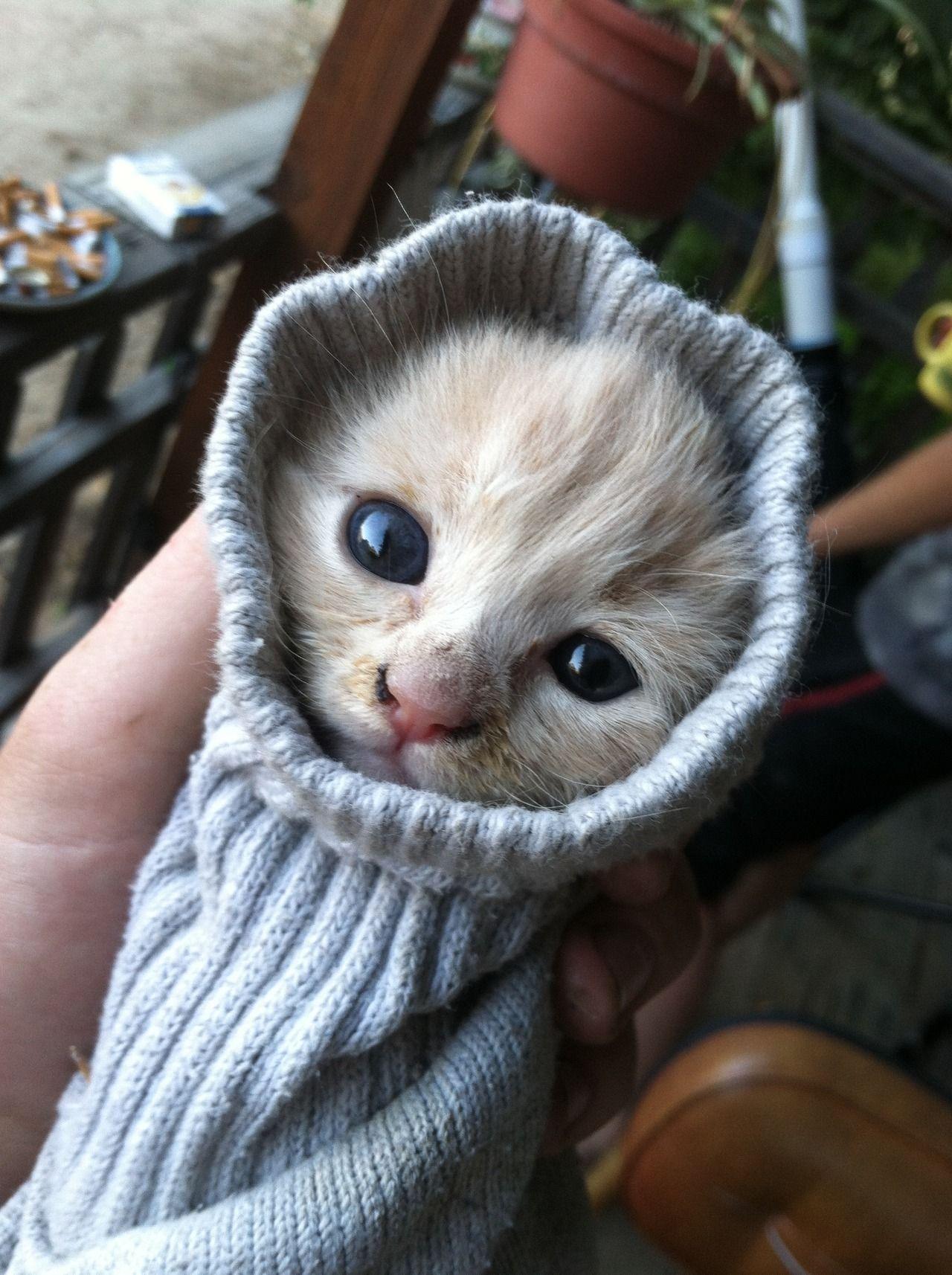 adorable kittens kittens Pinterest