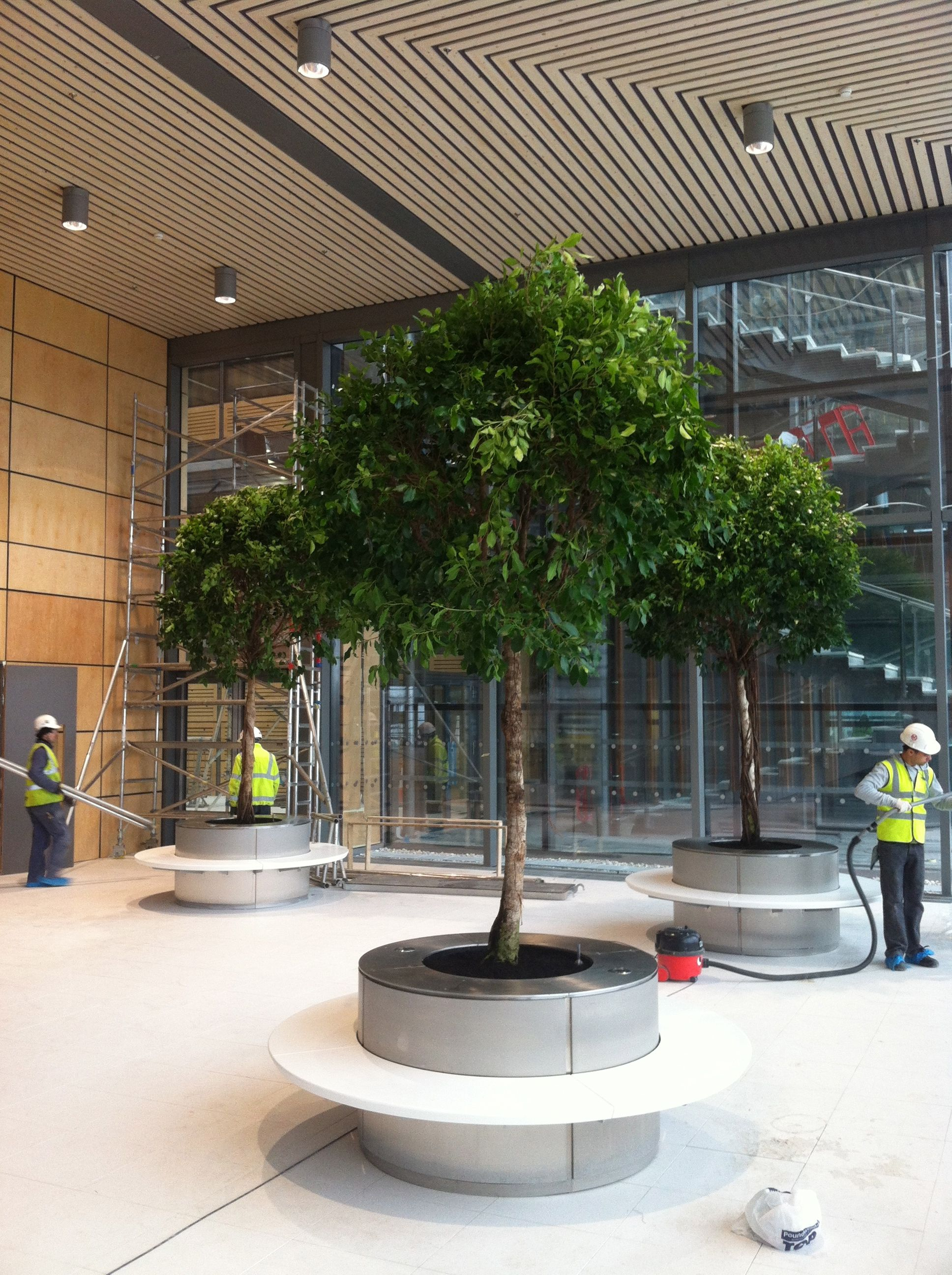 4m Ficus Trees Planted Into Circular Stainless Steel Planter Bench In A Public Space Within An Office Building Indoor Planters Plants Garden Design