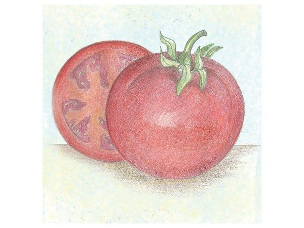 tomato, bonny best | Baker Creek Heirloom Seed Co | Garden in Spring