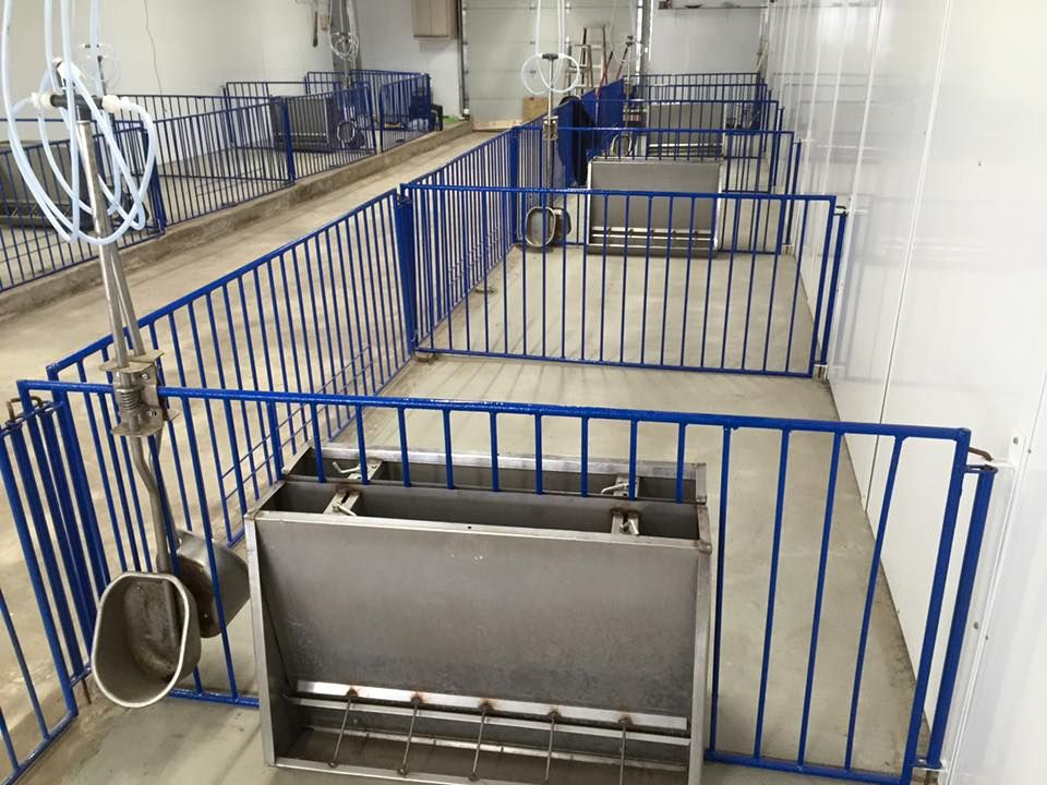 pigs feeders faces pig feeding co used sale feeder aafc market livestock precision delays cmyk submitted for hog manitoba operator