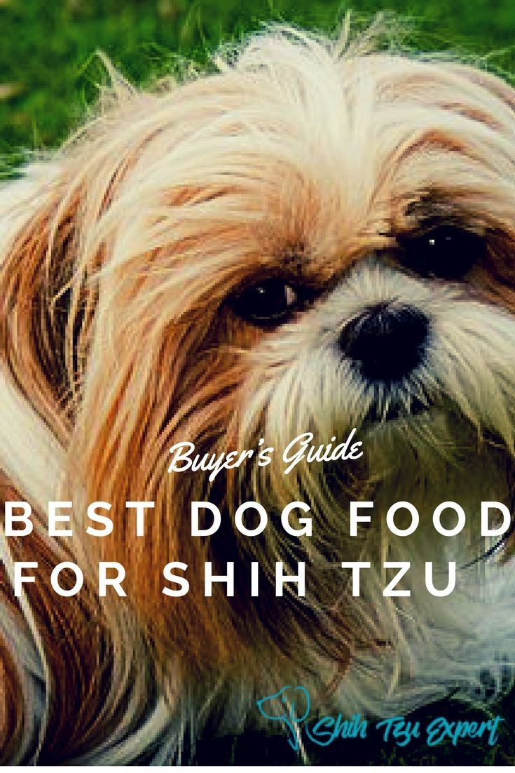 Best dog food for shih tzu best dog food shih tzu dog