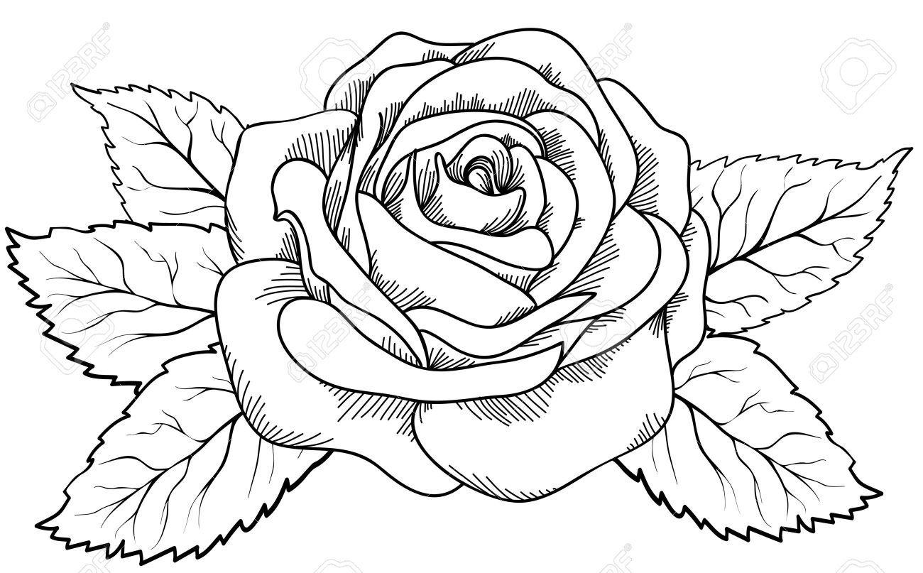 schöne rose im stil von schwarz und weiß gezeichnet viele