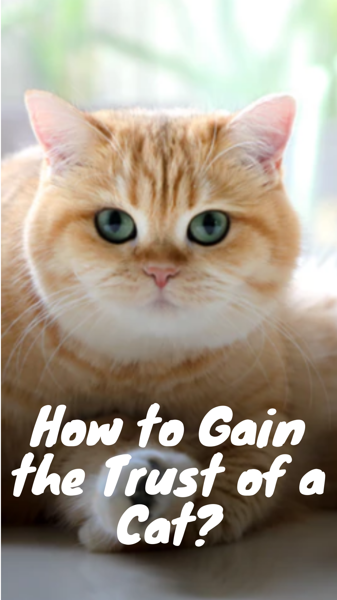 How To Gain The Trust Of Your Cat You Feel You Lost Your Kitty Cat S Trust Do You Find Yourself Wishing That Your New Kitty Cat Wo Cats Funny Cats Cat