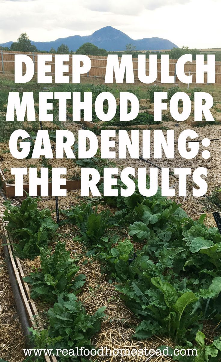 Deep mulch method for gardening the results vegetable
