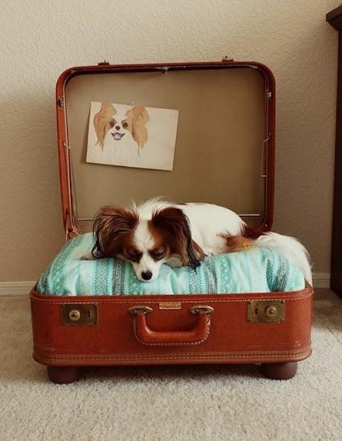 Little, cute doggie...