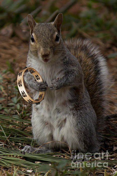 The Acorns Tambourine Player By Sandra Clark A Little Squirrel - Student befriends campus squirrels then dresses them in the cutest outfits ever