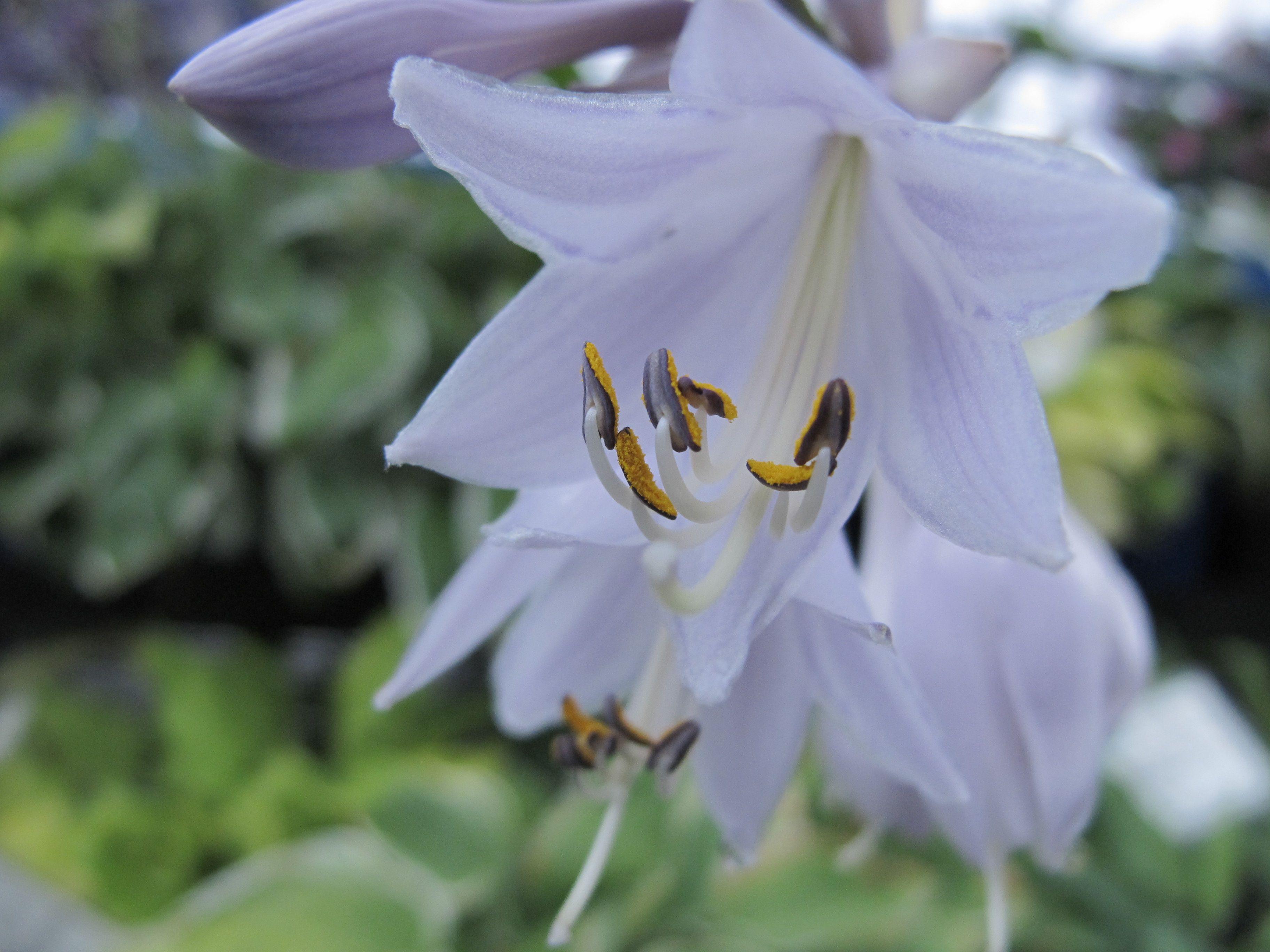 Soft shot of a flower testing my G11 (a pocket camera)