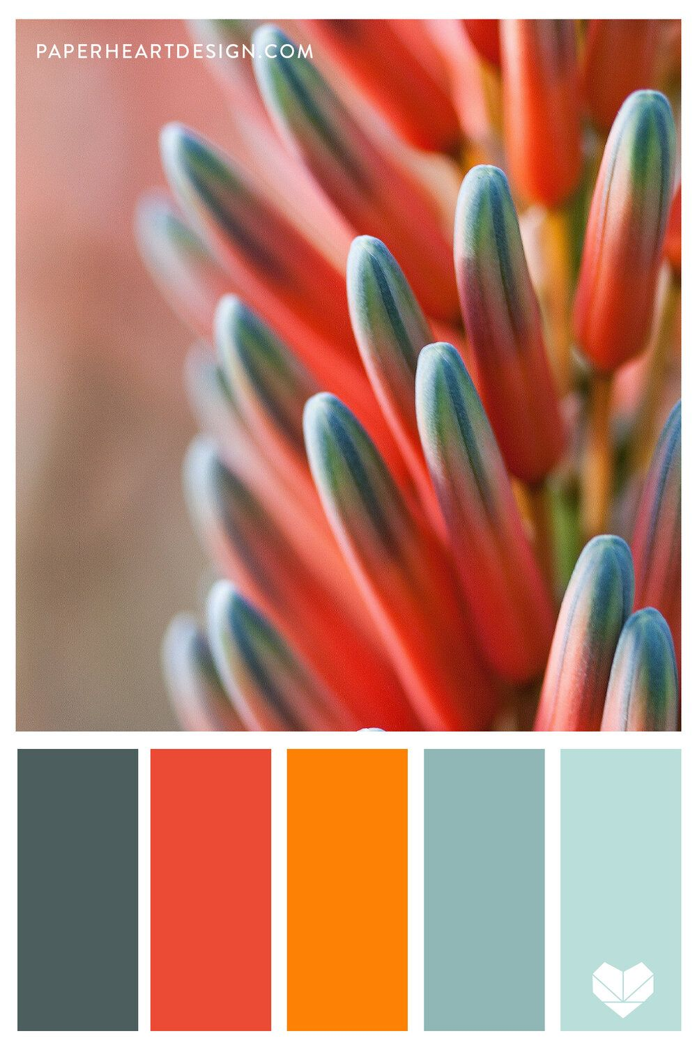 Outstanding Orange! A collection of orange inspired color schemes. Perfect for wedding colors, branding, interior design, and more. #colorpalette #colorscheme #colorinspo #orange #plant #nature #flower #teal #interiordesign #design #color #weddingcolors #branding