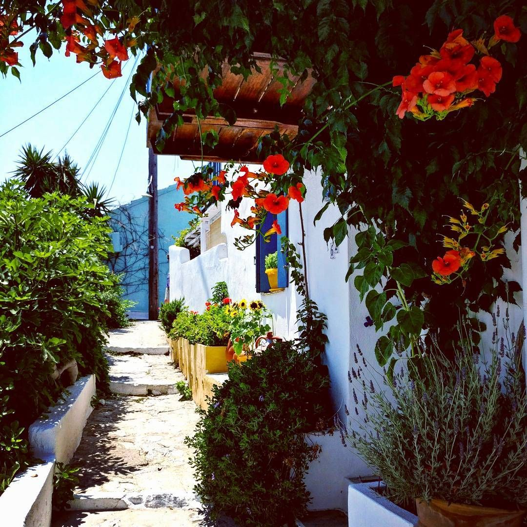 Greece Alonnisos Follow Me Around The World Greece Alonissos Relax Chillout Chill Flowers In 2020 Alonissos Travel Inspiration Around The Worlds